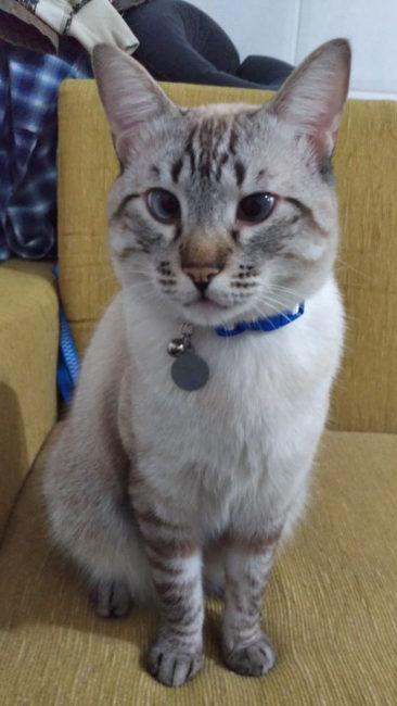 Este é o Benj, filho da Agnes e irmão da Brigitte.
