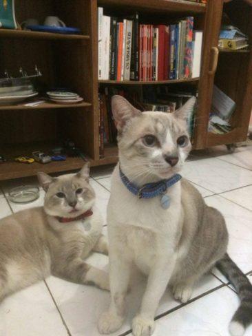 Estes são o Estanislau (de vermelho) e o Gordofredo (de azul), filhos da Larissa, de Salvador-BA.