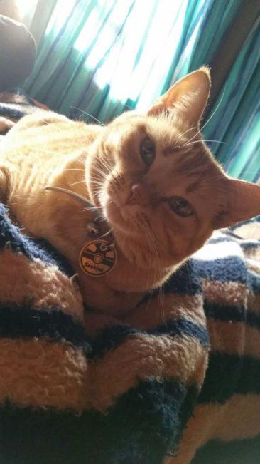 Essa é a Sashimi, irmã do Temaki e da Kallen, de Florianópolis – SC. Não é a cara do Cheshire Cat da Alice? <3