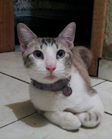 """O Raj é filho da Luciana: """"Meu gatinho Raj é arteiro... Mas um doce de gato... Adora carinho e atençao parece ate gente... Ele adorou a plaquinha e eu mais ainda.. Muitooo linda mesmo."""""""