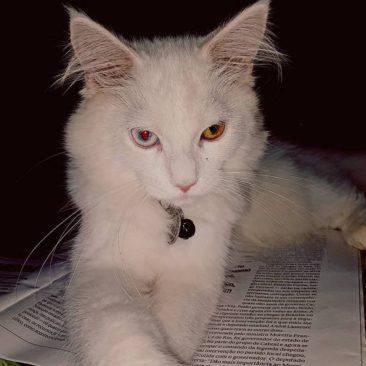 O Pax White é filho da Silvana.