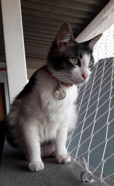 """""""Jovita é uma das gatinhas que moram na paróquia que frequento que por coincidência chama-se Nossa Senhora Aparecida. Quando vi essa plaquinha, não resisti. Amei!"""" - Juliana, mãe da Jovita"""