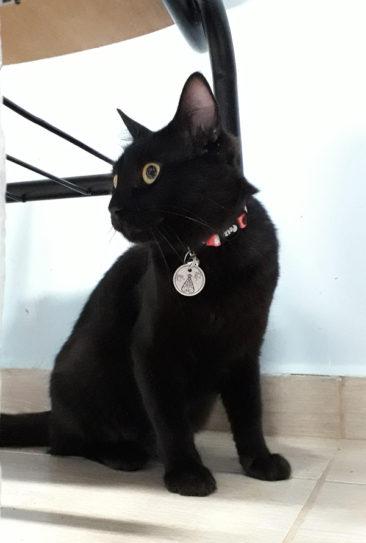 """""""Roberta é a outra gatinha que mora na paróquia junto com a Jovita. Nossa negona linda também ganhou uma medalha de Nossa Senhora Aparecida para identificá-la e abençoá-la ❤"""" - Juliana, mãe da Roberta"""