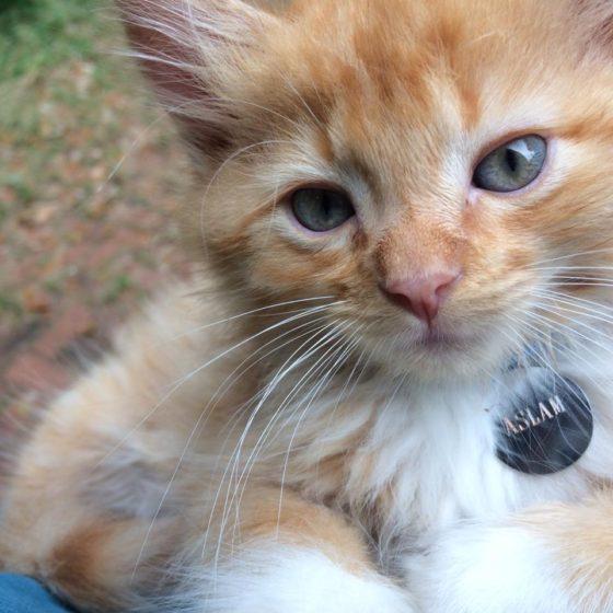 plaquinha identificacao personalizada gatos