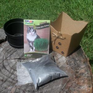 Kit Vasinho de Grama-dos-Gatos