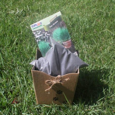 kit-grass-2