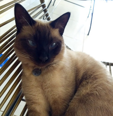 placa identificacao gatos patinha